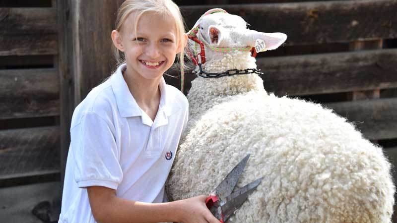 Hopkinton State Fair Sheep Show